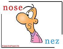 Nose - nez abc image dictionnaire anglais francais