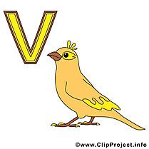 V vogel image – Alphabet allemand images cliparts