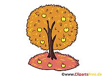 Clip arts gratuits arbre – Automne illustrations