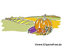 Clipart légumes champ – Automne dessins gratuits