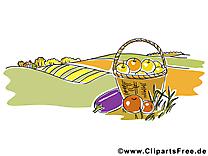 Images champ légumes – Automne clip art gratuit
