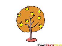 Images gratuites arbre – Automne clipart