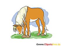 Chevaux clipart images t l charger gratuit - Clipart cheval gratuit ...