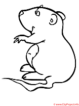 Hamster coloriage
