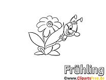 Sauterelle clip art – Animal image à colorier