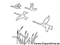 Oies dessin – Coloriage automne à télécharger