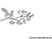 Oiseau images gratuites – Automne à colorier