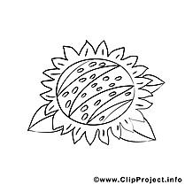 Tournesol dessin à télécharger – Automne à colorier