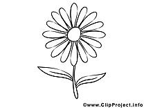 Aster clip art à imprimer images gratuites
