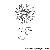 Tournesol illustration – Coloriage campagne cliparts