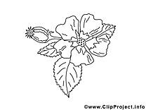 Fleurs coloriages