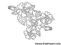 Fleurs image coloriage illustration