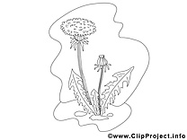 Pissenlit clip art – Fleurs image à colorier