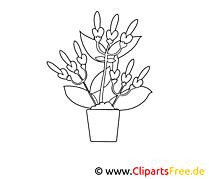 Pot dessins gratuits – Fleurs à colorier