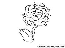 Rose dessin gratuit – Fleurs à colorier