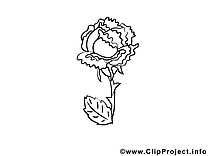 Rose image – Coloriage fleurs illustration