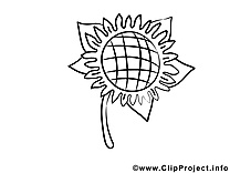 Tournesol illustration – Fleurs à imprimer