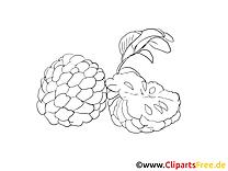 Fruits à imprimer cliparts gratuis