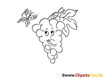 Raisin dessin gratuit – Fruits à colorier