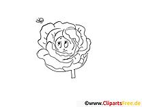 Chou clip art gratuit – Légumes à colorier