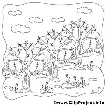 Arbres dessin gratuit – Printemps à colorier