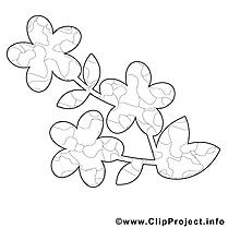 Illustration fleur – Printemps gratuit à imprimer