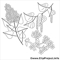 Lilas illustration – Coloriage printemps cliparts