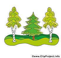 Bois image gratuite - Arbres cliparts
