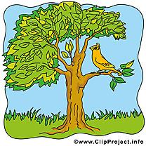 Arbre oiseau dessin – Été clip arts gratuits