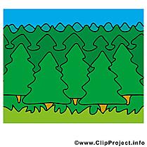Bois images gratuites – Été forêt clipart