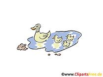 Canard image gratuite – Ferme illustration