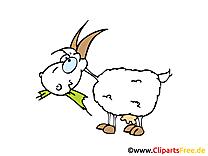 Chèvre image gratuite – Ferme cliparts