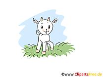 Chevreau clipart – Ferme dessins gratuits