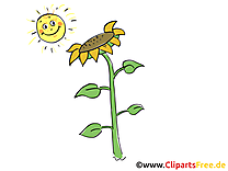 Illustration gratuite tournesol  – Ferme clipart
