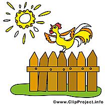 Soleil coq image gratuite – Ferme clipart