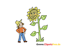 Tournesol image – Ferme images cliparts