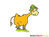 Vache clipart – Ferme dessins gratuits