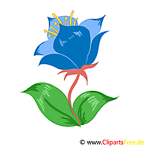 Bleuet illustration – Fleurs images