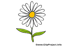 Camomille images – Fleurs dessins gratuits