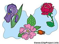 Fleurs clip art gratuit dessin