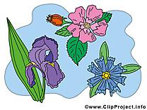 Fleurs dessin  cliparts à télécharger