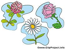 Fleurs dessin gratuit à télécharger image