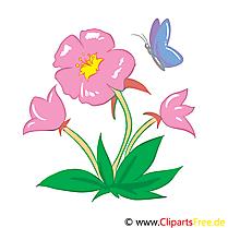 Guimauve image – Fleurs images cliparts