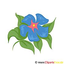 Illustration fleurs images gratuites à télécharger