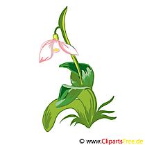 Lys illustration gratuite – Fleurs clipart