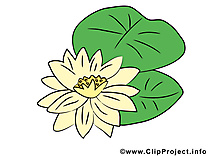Nénuphar fleurs illustration à télécharger gratuite