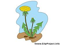Pissenlit clipart gratuit – Fleurs images