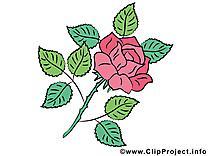 Rose illustration à télécharger – Fleurs images