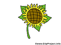 Tournesol dessins gratuits – Fleurs clipart