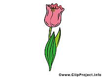 Tulipe image à télécharger – Fleurs clipart